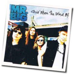 Mr. Big tabs and guitar chords