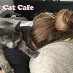 Shoffy chords for Cat cafe