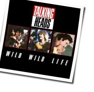 Talking Heads bass tabs for Wild wild life